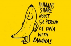 Banana vs Human DNA